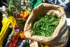 wild geplukt: rucola en eetbare bloemen
